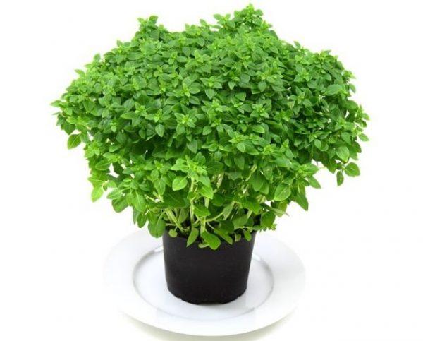 Jung-Pflanzen